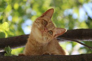 cat-in-a-tree