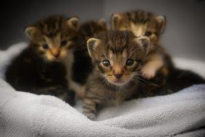 kittens-basket